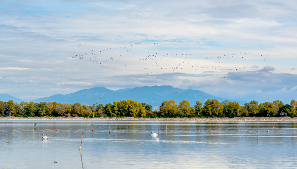 Pelicans and a flock of migratory birds. Lake Kerkini is now one of, if not the, premier birding site in Greece, and, as it is situated along the migratory flyway for migratory birds en route to the Aegean Sea, the Balkan region, the Black Sea, the Hungarian steppes and beyond it experiences an interesting migration (source: http://en.wikipedia.org/wiki/Lake_Kerkini)