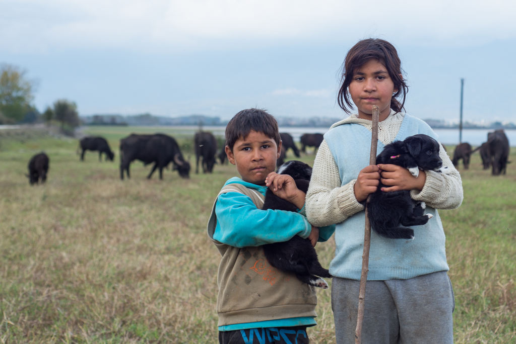 Young buffalo shepherds posing with their puppies. There are 1600 (water)buffalos around lake Kerkini. The population has increased from 600 animals in 1990 due to demand for buffalo meat and milk. The population in 1950 was 75000!