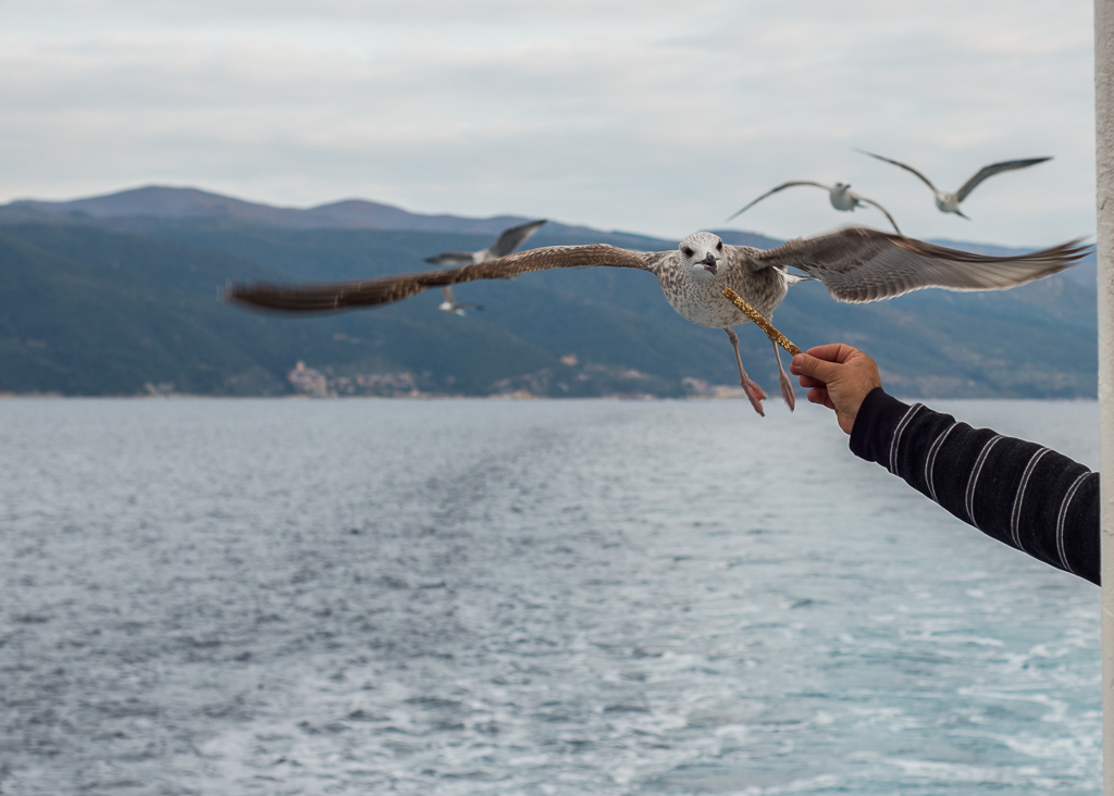 Feeding gulls is a common habit on the big boat entering or exiting Mount Athos.